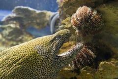 Schlangefische lizenzfreie stockbilder