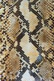 Schlangehaut-Musterhintergrund Lizenzfreies Stockfoto