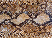 Schlangehaut-Musterhintergrund Stockbilder