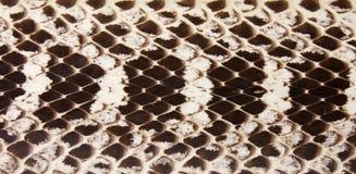 Schlangeleder. Stockbilder