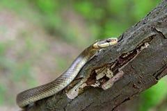 Schlangen Stockfoto