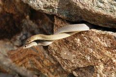 Schlangen in der Liebe Lizenzfreie Stockbilder