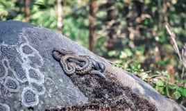 Schlangen, die in der Sonne sich aalen Lizenzfreie Stockbilder