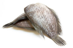Schlangen-Haut Gourami-Fische, Winkel des Leistungshebels Salit (Trichogaster-Pectoralis) lizenzfreie stockfotos