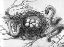 Schlangen im Nest des Vogels Lizenzfreie Stockbilder