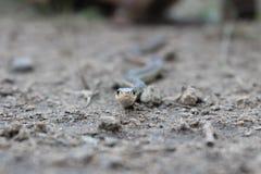 Schlangenaugen lizenzfreie stockfotografie