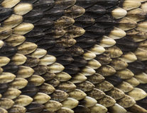 Schlangenhaut Lizenzfreie Stockbilder