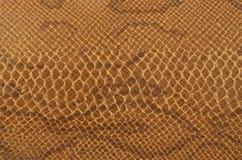 Schlangenhauthintergrund Stockfoto