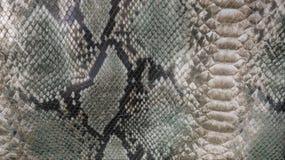 Schlangenhauthintergrund Abschluss oben lizenzfreies stockbild