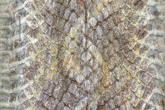 Schlangenhautreptil für Tiermuster stockbilder