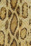 Schlangenhautreptil für Tiermuster lizenzfreies stockbild