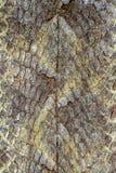 Schlangenhautreptil f?r Muster stockbild