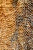 Schlangenhautreptil f?r Muster stockfoto