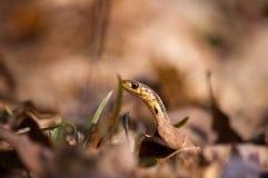 Schlangenprofil Stockbilder