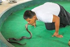 Schlangentrainer mit Königskobra Lizenzfreies Stockfoto