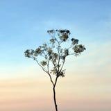 Schlanker Eukalyptus im Rauch-Dunst Lizenzfreies Stockfoto