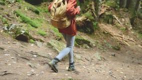 Schlankes Mädchen, das entlang den Weg im Koniferenwaldtourismus in der Kaukasus-Reserve geht Nahaufnahme eines touristischen ` s stock video footage