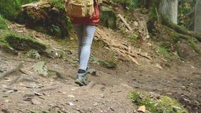 Schlankes Mädchen, das entlang den Weg im Koniferenwaldtourismus in der Kaukasus-Reserve geht Nahaufnahme eines touristischen ` s stock footage