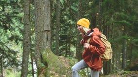 Schlankes Mädchen geht entlang den Weg zur Spitze im Koniferenwaldtourismus in der Kaukasus-Reserve Nähert sich stock video
