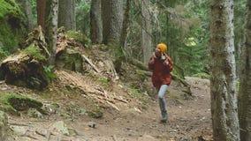 Schlankes Mädchen geht entlang den Weg zur Spitze im Koniferenwaldtourismus in der Kaukasus-Reserve Nähert sich stock footage