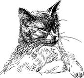 Schlaue Katze Stockfoto