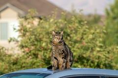 Schlaue Katze, die auf einem Auto in der städtischen Landschaft sitzt stockbild