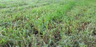 Schlecht gemähtes Gras stockfoto