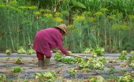Schlechte alte asiatische Frauenlandwirtfunktion Stockfoto