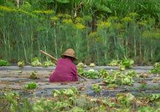Schlechte alte asiatische Frauenlandwirtfunktion Lizenzfreie Stockfotos