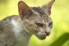Schlechte Katze Stockfotos