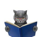 Schlechte Katze in den Gläsern liest ein Buch lizenzfreies stockbild