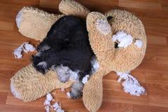 Schlechter frecher zerstörtes Plüschspielzeug des Schnauzer Hund Stockbilder
