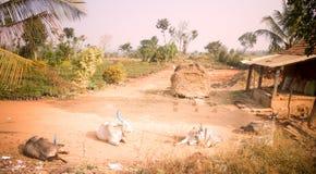 Schlechter indischer Haushalt in der Provinz Andhra Pradesh 2 Lizenzfreie Stockfotografie