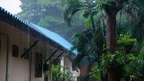 Schlechtes Wetter und Nebensaison auf Tropeninsel Schwerer Monsunregen über Palmen Klimawandelkonzept 4k stock footage