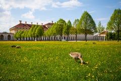 Schleissheim pałac Fotografia Stock