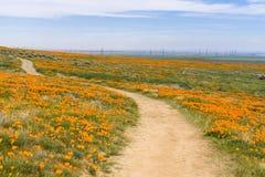 Schleppen Sie auf den Hügeln des Antilopen-Tales Kalifornien Poppy Reserve während der Blütezeit lizenzfreie stockbilder
