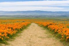 Schleppen Sie auf den Hügeln des Antilopen-Tales Kalifornien Poppy Reserve während der Blütezeit lizenzfreie stockfotos