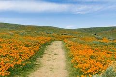 Schleppen Sie auf den Hügeln des Antilopen-Tales Kalifornien Poppy Reserve während der Blütezeit lizenzfreies stockfoto