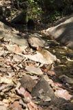 schleppen Sie auf Hügel im Wald für das Wandern oder Trekking Lizenzfreie Stockbilder