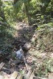schleppen Sie auf Hügel im Wald für das Wandern oder Trekking Stockfoto