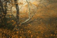 Schleppen Sie durch einen mysteriösen dunklen alten Wald im Nebel Herbst stockbilder