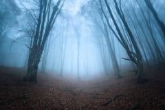 Schleppen Sie durch einen mysteriösen dunklen alten Wald im Nebel Herbst lizenzfreie stockbilder