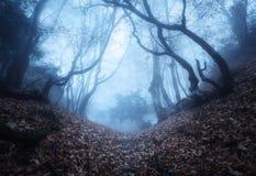 Schleppen Sie durch einen mysteriösen dunklen alten Wald im Nebel Herbst stockfotografie