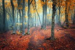 Schleppen Sie durch einen mysteriösen dunklen alten Wald im Nebel Herbst lizenzfreies stockbild