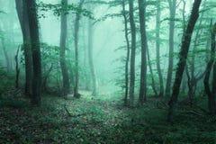 Schleppen Sie durch einen mysteriösen dunklen Wald im Nebel mit grünen Blättern stockbild