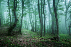 Schleppen Sie durch einen mysteriösen dunklen Wald im Nebel mit grünen Blättern lizenzfreies stockfoto