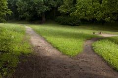 Schleppen Sie im Park, der in zwei sich aufspaltet Lizenzfreies Stockbild