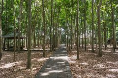 Schleppen Sie im Ubud-Affe-Wald, Bali-Insel Stockfoto