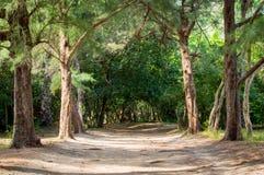 Schleppen Sie an Leamsala-Weise zu Höhle Phraya Nakorn, Thailand Nationalpark Khao Sam Roi Yot lizenzfreie stockfotos