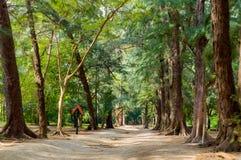 Schleppen Sie an Leamsala-Weise zu Höhle Phraya Nakorn, Thailand Nationalpark Khao Sam Roi Yot stockfotos